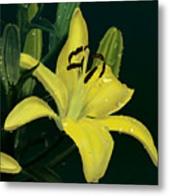 Yellow Lilly Metal Print by Wade Clark