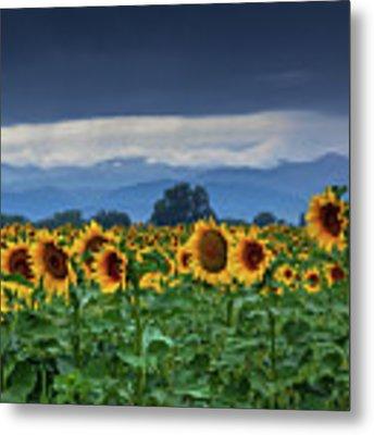 Sunflowers Under A Stormy Sky Metal Print by John De Bord