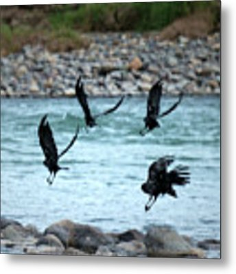 4 Crows At The River Metal Print by Mary Lee Dereske
