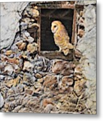 A New Home Barn Owl Metal Print by Alan M Hunt
