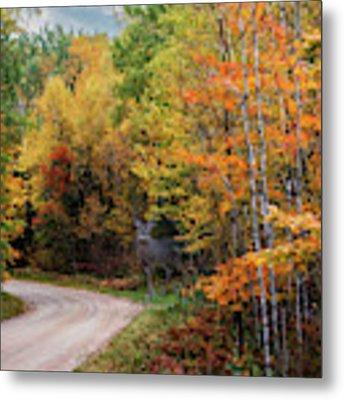 Autumn Buck  Metal Print by Patti Deters
