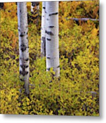 Autumn Contrasts Metal Print by John De Bord
