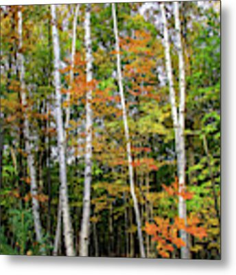 Autumn Grove, Vertical Metal Print by Dawn Richards