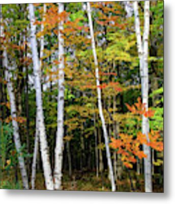 Autumn Grove, Wisconsin Metal Print by Dawn Richards