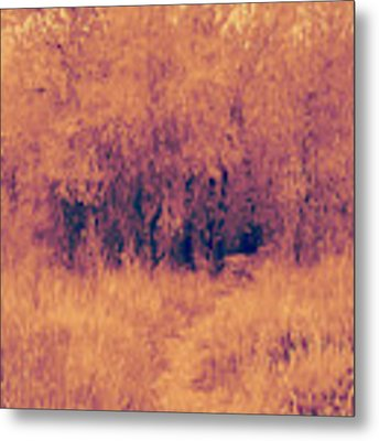 Autumn Mystery Metal Print by David King