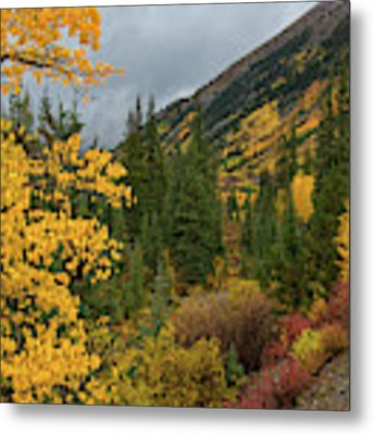Autumn Splendor Metal Print by Darlene Bushue