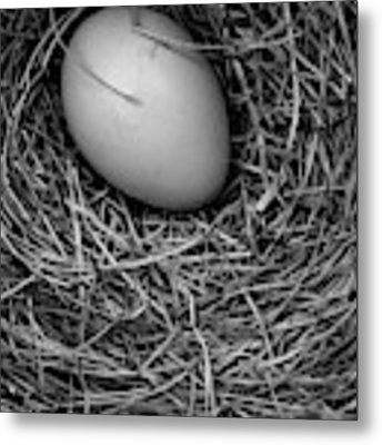 Birds Nest Black And White Metal Print by Edward Fielding
