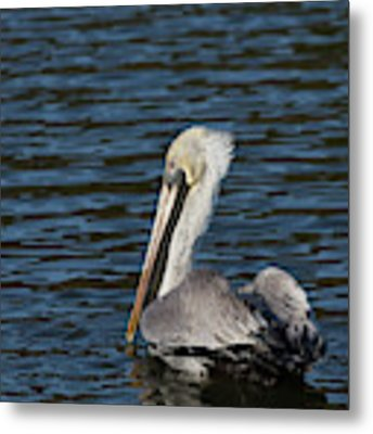 Brown Pelican Metal Print by Jemmy Archer