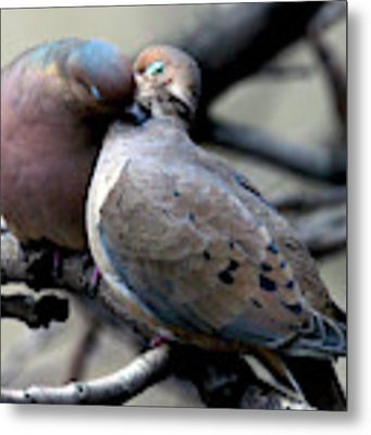 Cooing Mourning Doves 2 Metal Print by Patricia Youngquist