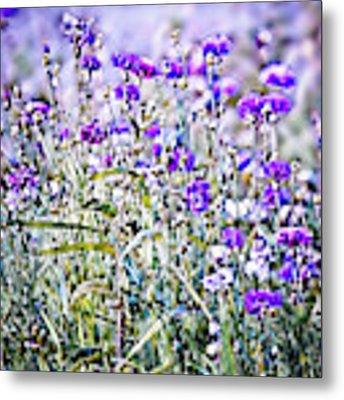 Cornflower Meadow Metal Print by Susan Maxwell Schmidt
