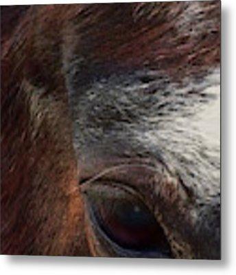 Eye Of A Horse  Metal Print by Shelli Fitzpatrick