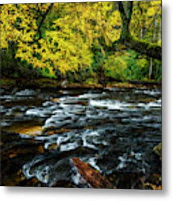 Fall Day On Cranberry River Metal Print by Thomas R Fletcher