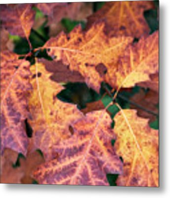 Fall Flames Metal Print by Whitney Goodey