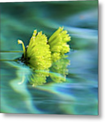 Floating Daisies 1 Metal Print by Dawn Richards