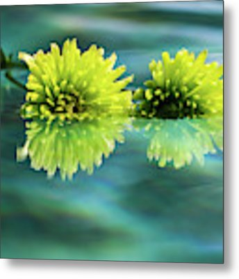 Floating Daisies 2 Metal Print by Dawn Richards