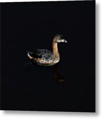 Floating On The Water Metal Print by Dan Friend