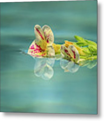 Floating Petunia Metal Print by Dawn Richards