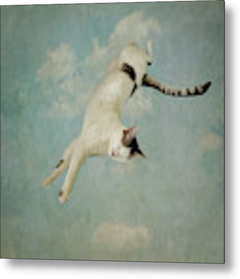 Flying Cat Metal Print by Sally Banfill