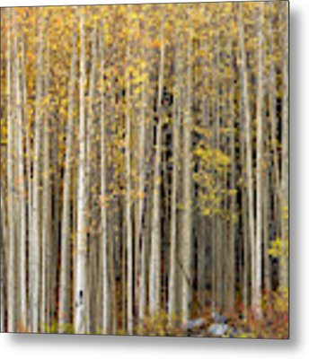 Gold Dust Metal Print by Angela Moyer