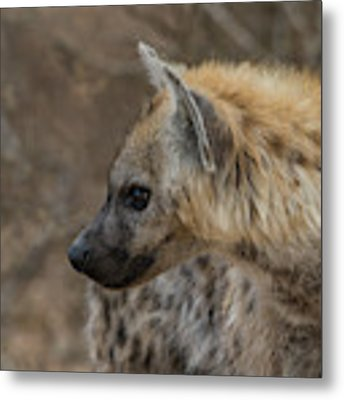 H1 Metal Print by Joshua Able's Wildlife