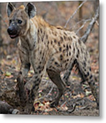 H2 Metal Print by Joshua Able's Wildlife