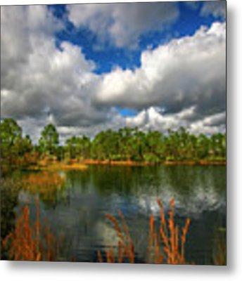 Halpatiokee Lake View #2 Metal Print by Tom Claud