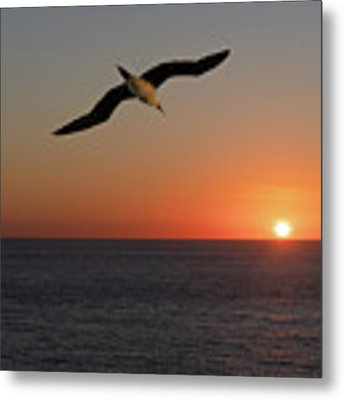 Into The Setting Sun Metal Print by William Dickman