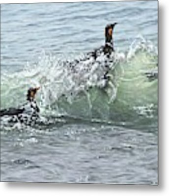 King Penguins Swimming In The Waves Metal Print by Alan M Hunt