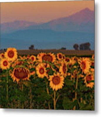 Light Of The Sunflowers Metal Print by John De Bord