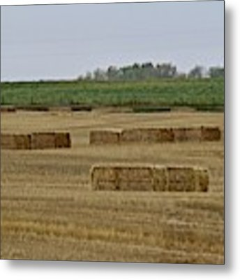 Lined Up Metal Print by Ann E Robson