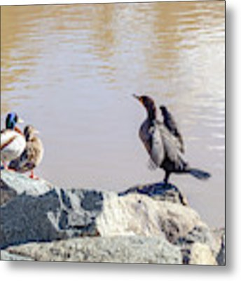 Morning Chat Metal Print by Alison Frank
