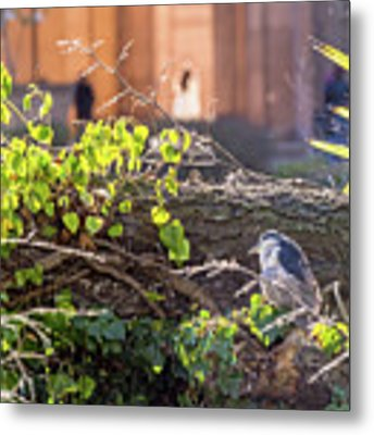 Night Heron At The Palace Metal Print by Kate Brown