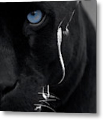 Pantheress Metal Print by ISAW Company