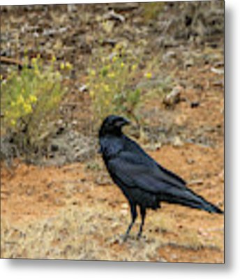 Raven, Grand Canyon Metal Print by Dawn Richards