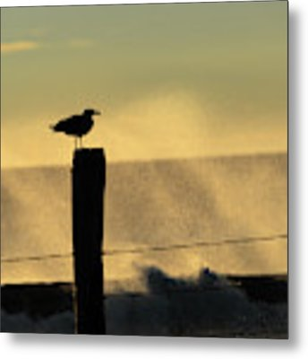 Seagull Silhouette On A Piling Metal Print by William Dickman