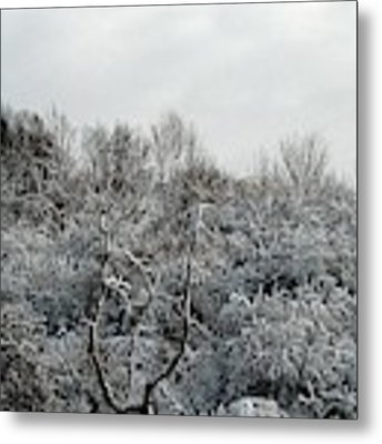Snow Covered Trees Metal Print by Rose Santuci-Sofranko
