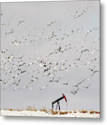Snow Geese Over Oil Pump 02 Metal Print by Rob Graham