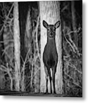 Standing Tall Metal Print by Michael Hubley