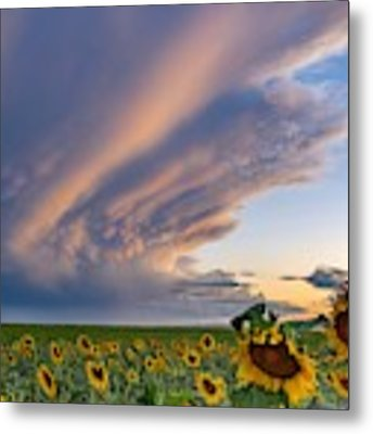 Sunflowers And Storm Clouds Metal Print by Rand
