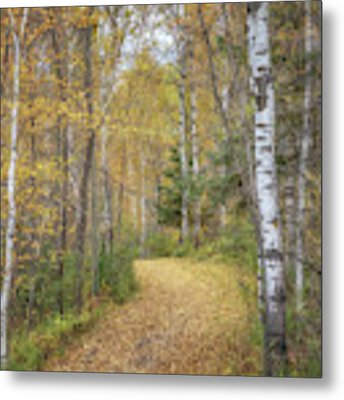 The Golden Path Metal Print by Susan Rissi Tregoning
