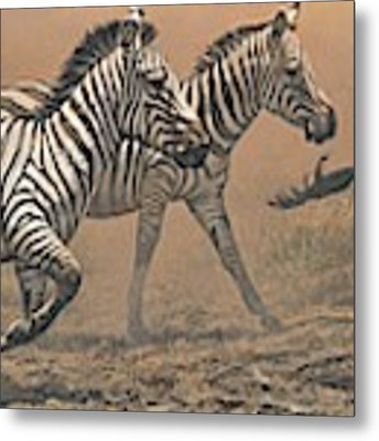 The Race - Zebras Metal Print by Alan M Hunt