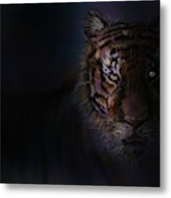 Tiger In The Dark Metal Print by Darren Cannell