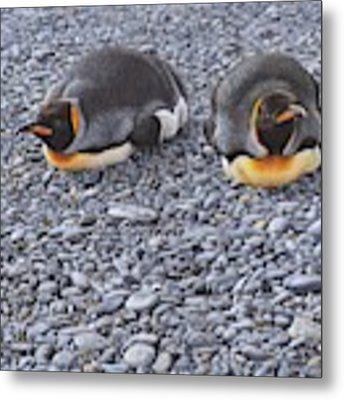 Two King Penguins By Alan M Hunt Metal Print by Alan M Hunt