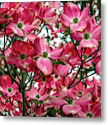 Washington State Magnolia Metal Print by Mae Wertz