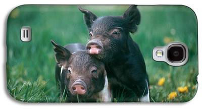 Piglets Galaxy S4 Cases
