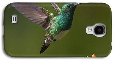 Flying Birds Galaxy S4 Cases