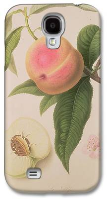 Plum Drawings Galaxy S4 Cases