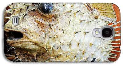 Porcupine Fish Galaxy S4 Cases