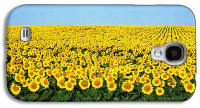 Sunflower Fields Galaxy S4 Cases
