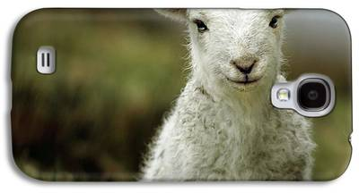 Sheep Galaxy S4 Cases